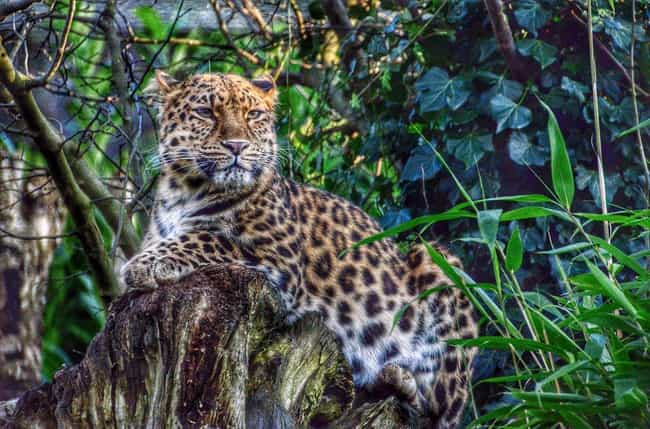 Worlds most beautiful animals leopard is listed or ranked 4 on the list the worlds most beautiful animals voltagebd Image collections