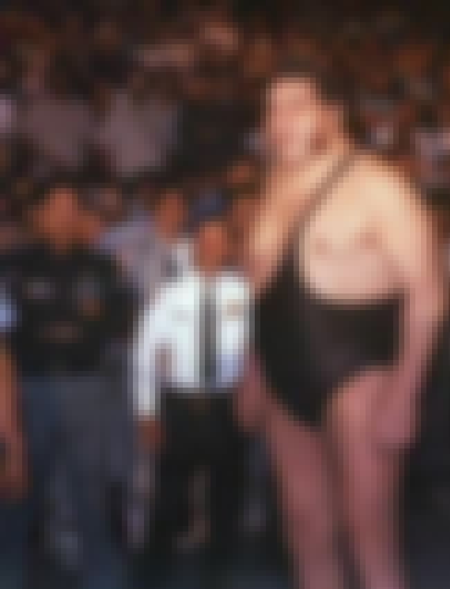 No.8 — André the Giant is listed (or ranked) 8 on the list The Greatest Wrestlers of All Time