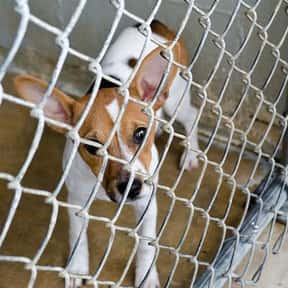 Animal Charity is listed (or ranked) 12 on the list What Is the Best Way to Spend $100?