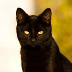 Black Cat Crossing Your Path is listed (or ranked) 19 on the list The Superstitions You Secretly Believe