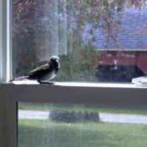 Bird in the House Is a Sign of is listed (or ranked) 24 on the list The Superstitions You Secretly Believe