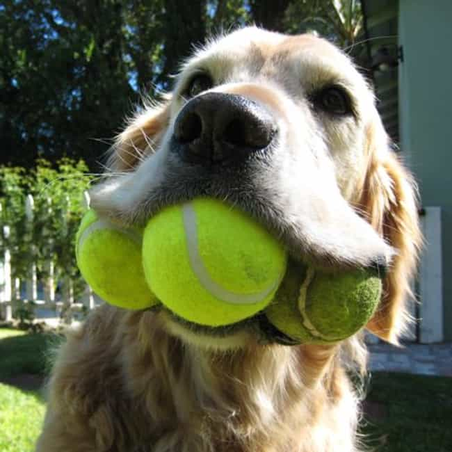 Drop It is listed (or ranked) 8 on the list The Easiest Tricks to Teach Your Dog