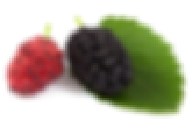 Mulberry is listed (or ranked) 2 on the list The Top 10 Skin Whitening Ingredients