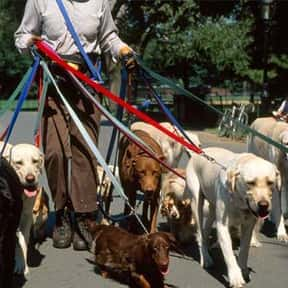 Dog Walker is listed (or ranked) 20 on the list Fun Jobs That Pay Well