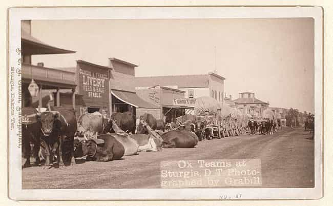 Ox Teams at Sturgis is listed (or ranked) 1 on the list Beautiful Old Photos Of Life In The Real Wild West
