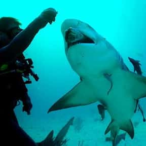 Marine Biologist is listed (or ranked) 7 on the list Fun Jobs That Pay Well