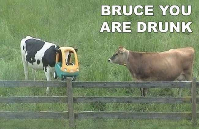 "Bruce is listed (or ranked) 2 on the list The Very Best of the ""You Are Drunk"" Meme"