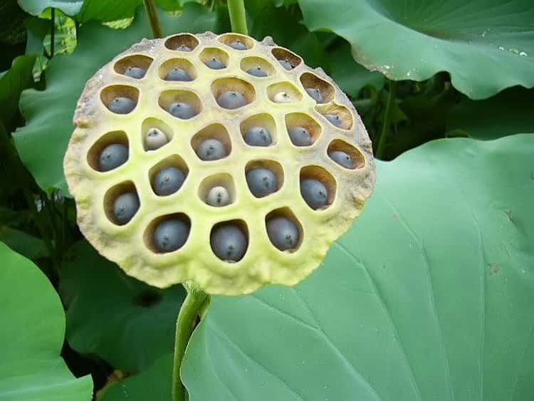 These Vomit Inducing Photos Will Trigger Your Trypophobia