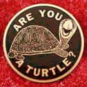 Order of the Turtle is listed (or ranked) 16 on the list Famous Secret Societies List