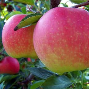 Gala Apple is listed (or ranked) 16 on the list The Best Antioxidant Foods