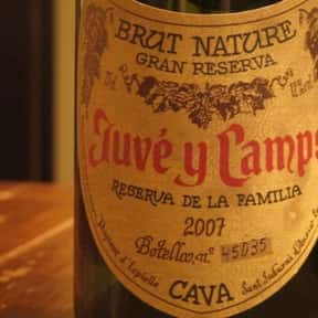 Juvé Y Camps is listed (or ranked) 25 on the list The Best Sparkling Wine Brands