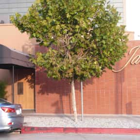 Jar is listed (or ranked) 14 on the list The Best Steakhouses in Los Angeles