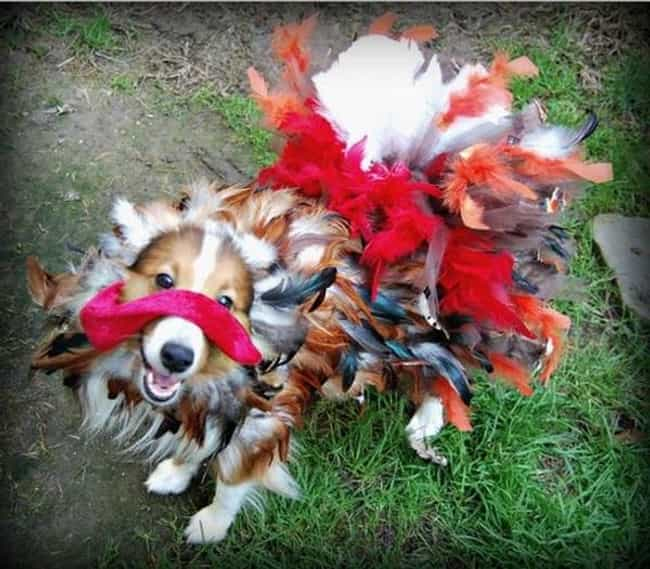 This Happy, Feathery Pup is listed (or ranked) 3 on the list 41 Animals Who Are Very Excited for Thanksgiving