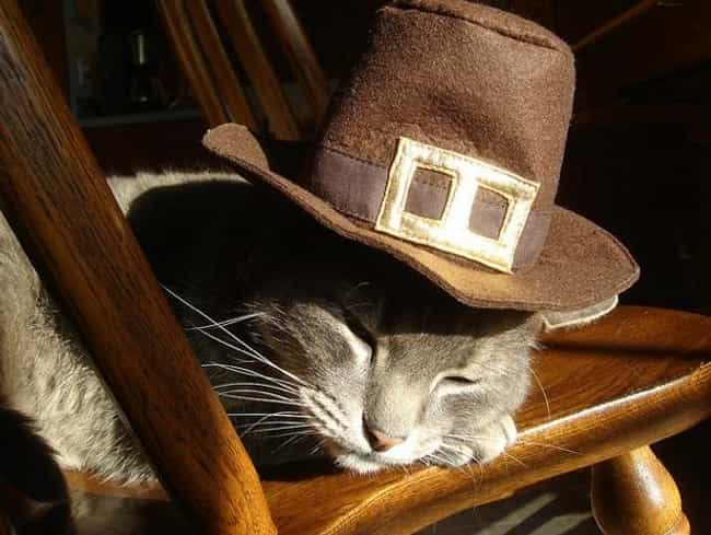 This Kitty Ate Too Much ... is listed (or ranked) 4 on the list 41 Animals Who Are Very Excited for Thanksgiving