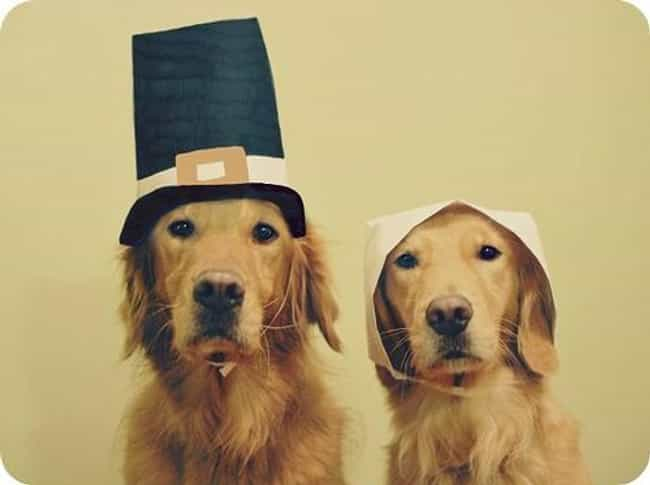 These Pilgrim Pups Don't Seem ... is listed (or ranked) 1 on the list 41 Animals Who Are Very Excited for Thanksgiving