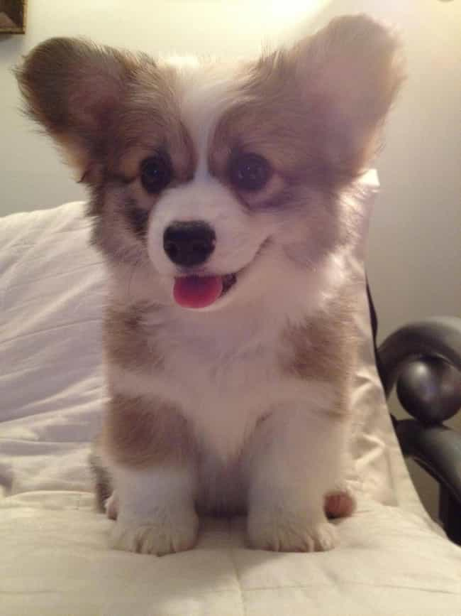 Photo Time! is listed (or ranked) 2 on the list The Cutest Corgi Pictures