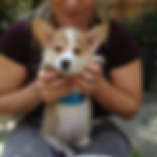 Is This Cute? Am I Standing? is listed (or ranked) 3 on the list The Cutest Corgi Pictures