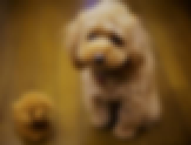 Poodle With Stuffed Animal is listed (or ranked) 1 on the list The Cutest Poodle Pictures