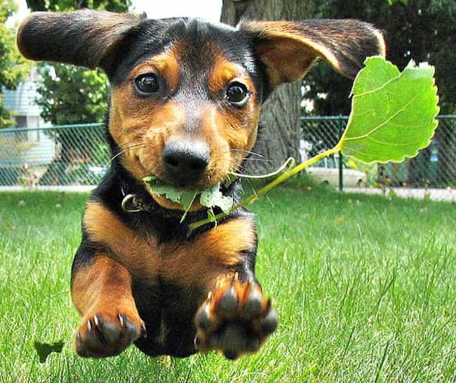 Resultado de imagen para dachshund cute