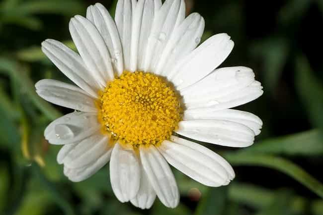 Chamomile is listed (or ranked) 2 on the list The Best Essential Oils for Sleep