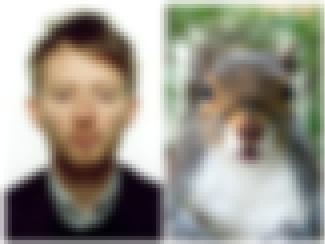 Yearbook Photo is listed (or ranked) 8 on the list 16 Squirrels That Look Like Radiohead