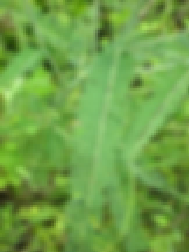 Vetiver is listed (or ranked) 3 on the list The Best Essential Oils for ADHD