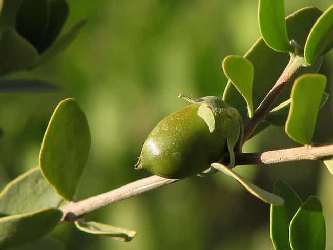 Jojoba is listed (or ranked) 2 on the list The Best Essential Oils for Constipation
