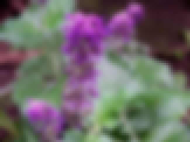 Clary Sage is listed (or ranked) 1 on the list The Best Essential Oils for Hair Loss
