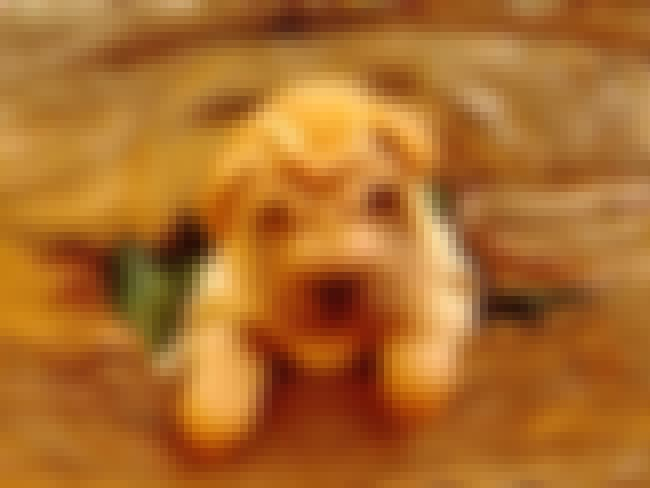 Shar Pei Stuck in a Hole is listed (or ranked) 2 on the list The Cutest Shar Pei Pictures