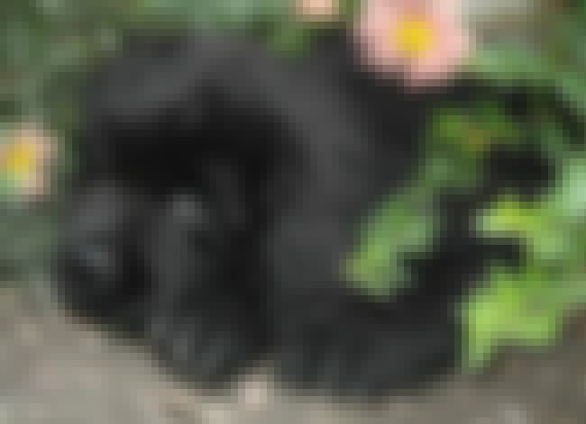 Puppy Hiding in Flowers is listed (or ranked) 4 on the list The Cutest Newfoundland Pictures
