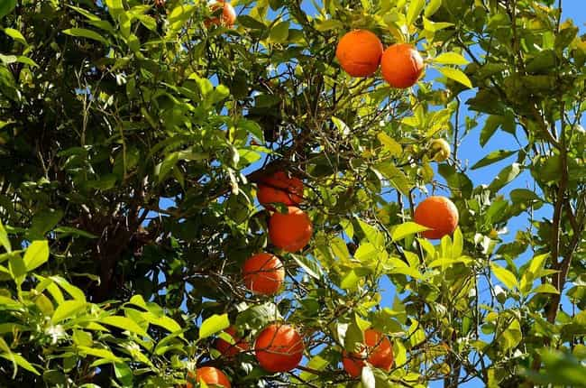 Orange is listed (or ranked) 3 on the list The Best Essential Oils for Kidney Stones