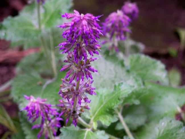 Clary Sage is listed (or ranked) 2 on the list The Best Essential Oils for Wrinkles