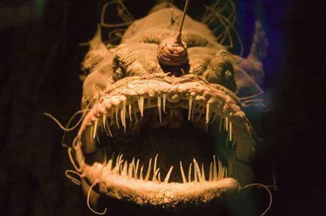 15 real things that are straight out of horror movies scariest 96 of the oceans are still un is listed or ranked publicscrutiny Images