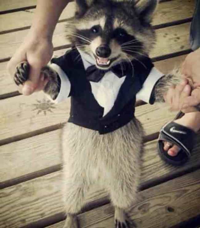Racoon is listed (or ranked) 3 on the list The Cutest Pics of Gross-Looking Animals