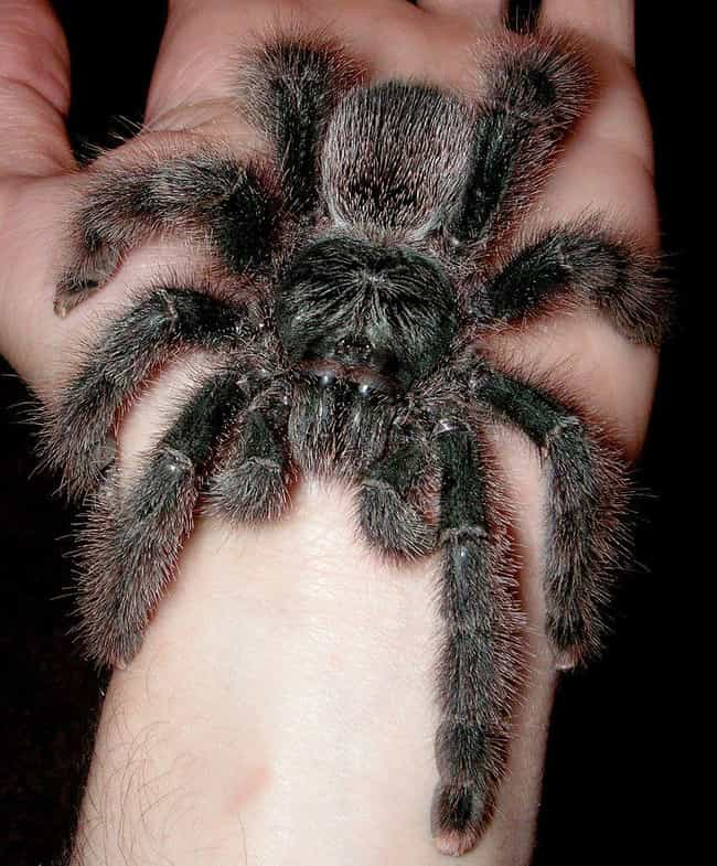 Spiders is listed (or ranked) 3 on the list 13 Things That Are Instinctively Scary To Humans (And Why)