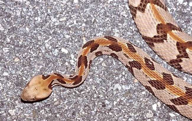 Snakes is listed (or ranked) 4 on the list Tips For Encountering 5 Dangerous Animals
