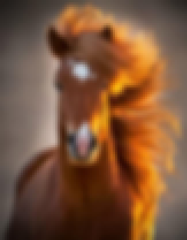 Photogenic Horse is listed (or ranked) 2 on the list The Most Photogenic Animals of All Time