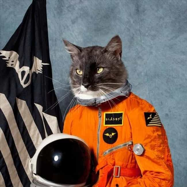 "Klaxons ""Flashover"" is listed (or ranked) 1 on the list The Best (Real) Album Covers With Cats"