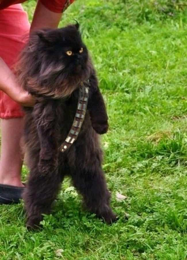 Mewbacca is listed (or ranked) 3 on the list The Cutest Pets Dressed as Star Wars Characters
