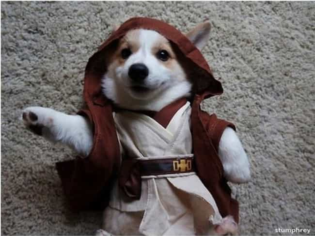 Obi-Wan Kenorgi is listed (or ranked) 4 on the list The Cutest Pets Dressed as Star Wars Characters