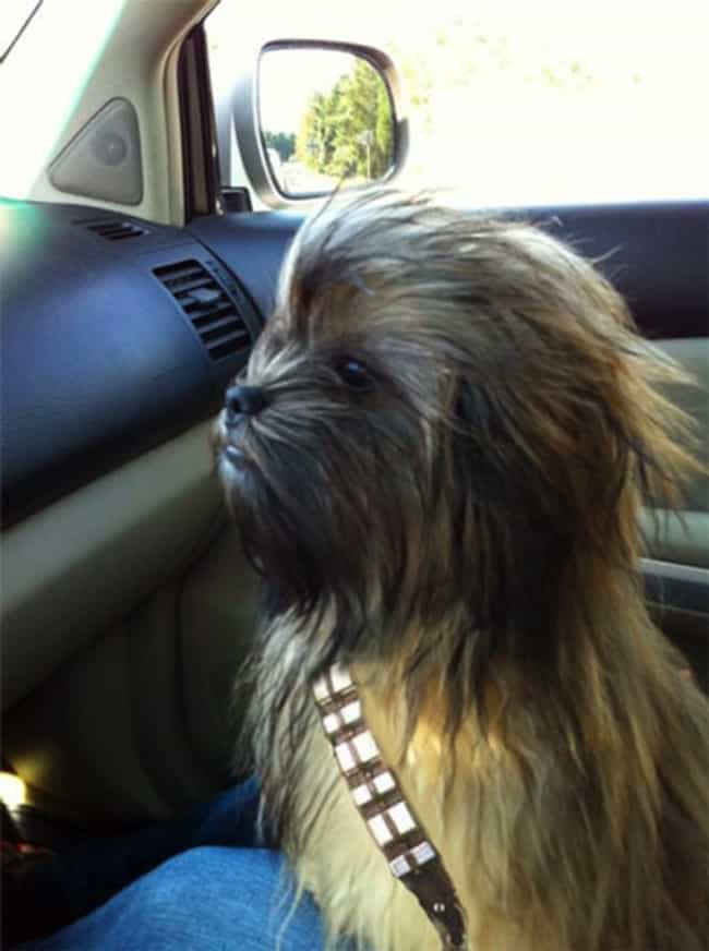 Chew-bark-a is listed (or ranked) 1 on the list The Cutest Pets Dressed as Star Wars Characters