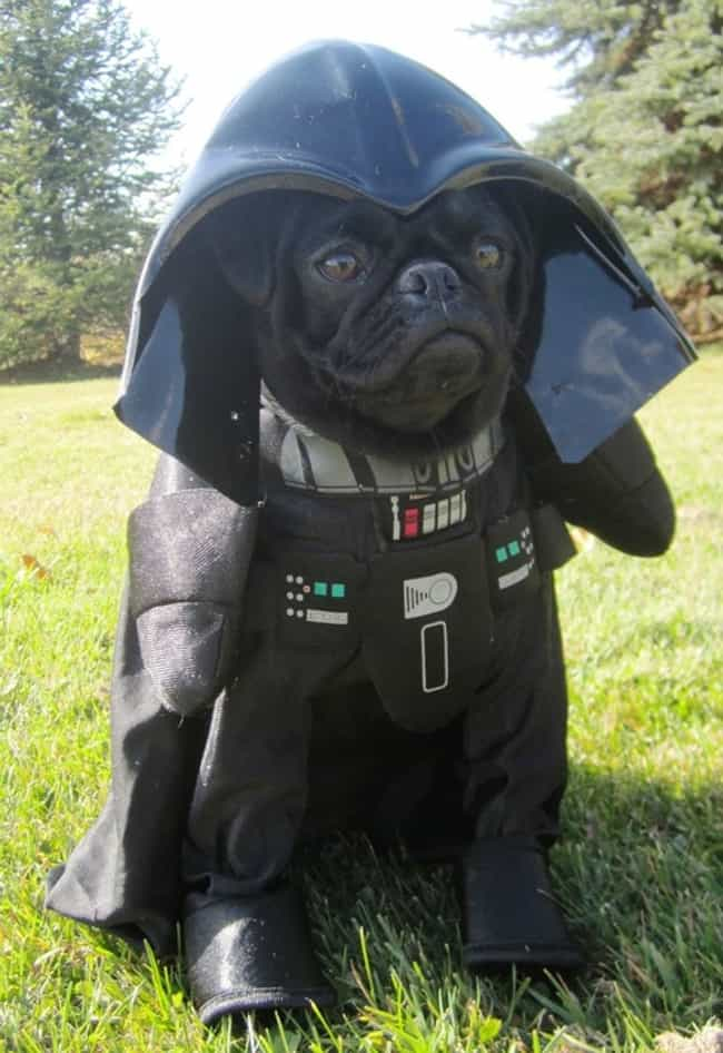 Darth Pug is listed (or ranked) 2 on the list The Cutest Pets Dressed as Star Wars Characters