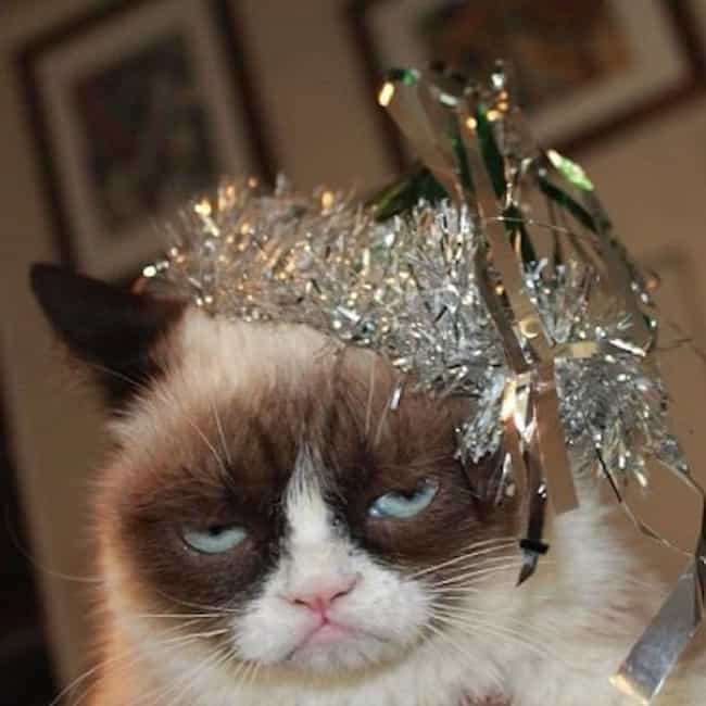 Grumpy Cat Hates New Year'... is listed (or ranked) 4 on the list The Best Pictures of Grumpy Cat