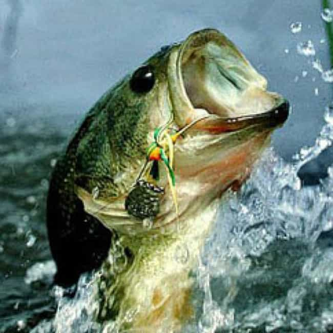 Fish During Pre-Spawn is listed (or ranked) 2 on the list The Best Bass Fishing Tips for Wannabe Anglers