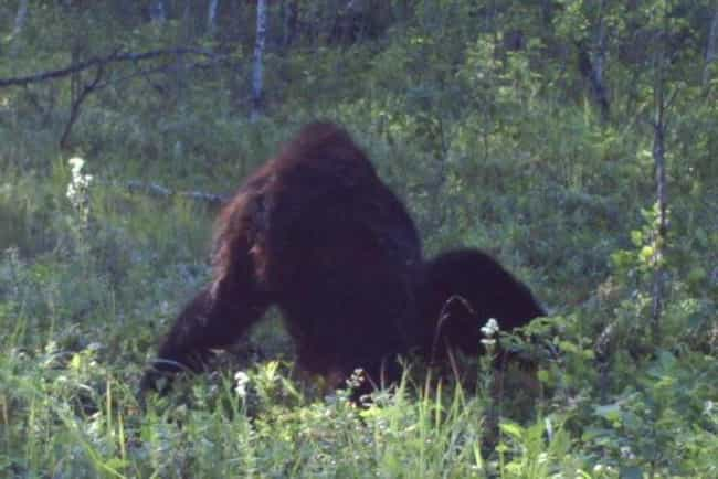 2012 Spotting is listed (or ranked) 2 on the list The Best (Alleged) Pictures of Bigfoot