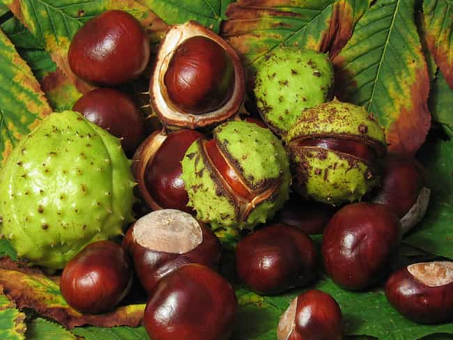 Use Horse Chestnut Seed for Ci... is listed (or ranked) 4 on the list The Best Health Tips & Natural Remedies