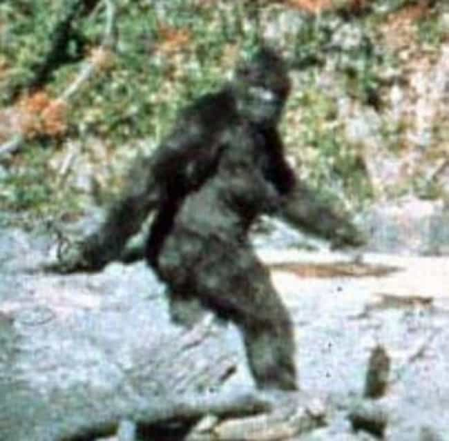 Classic Footage is listed (or ranked) 1 on the list The Best (Alleged) Pictures of Bigfoot