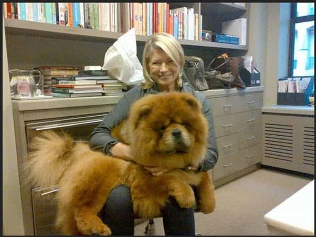 Genghis Khan is listed (or ranked) 2 on the list The Dumbest Celebrity Pet Names