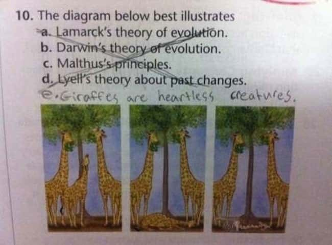 This Diagram About Giraffes is listed (or ranked) 19 on the list 53 Hilarious Test Answers From Kids