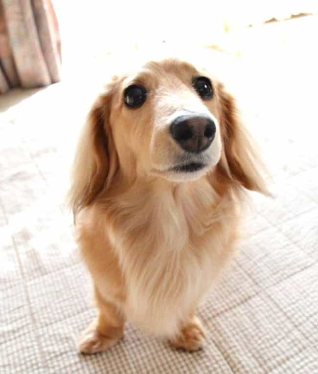 Hi, friend! is listed (or ranked) 2 on the list The Cutest Dogs of Instagram